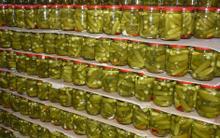 Cơ hội xuất khẩu dưa chuột bao tử sang Nga.