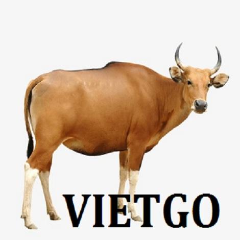 Cơ hội xuất khẩu bò sang thị trường Lào