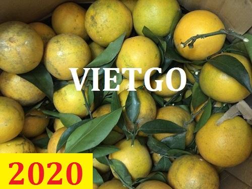 Cơ hội giao thương – Đơn hàng thường xuyên – Cơ hội xuất khẩu cam tươi từ Việt Nam sang thị trường Bangladesh.