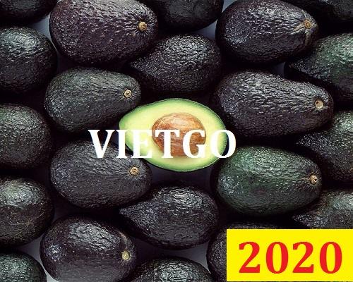 Cơ hội giao thương Đặc Biệt Cả Năm – Cơ hội xuất khẩu Quả Bơ cho vị khách hàng quen thuộc của VIETGO