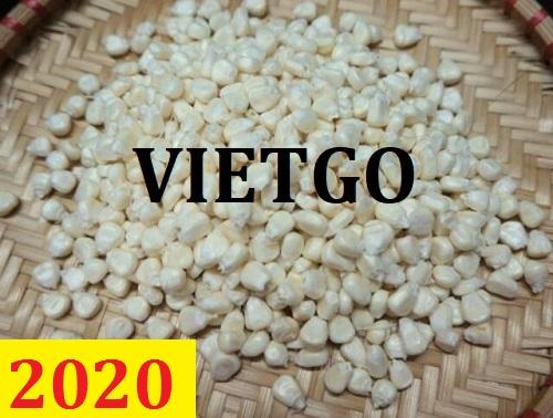 Cơ hội giao thương – Đơn hàng Thường xuyên - Cơ hội xuất khẩu Ngô Nếp sang thị trường Togo