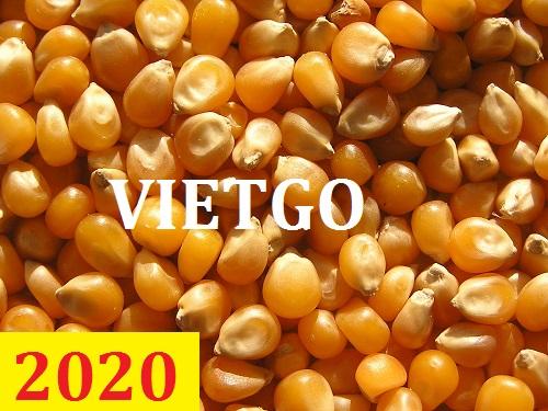 Cơ hội giao thương – Đơn hàng thường xuyên – Cơ hội xuất khẩu Ngô Vàng sang thị trường Bangladesh.