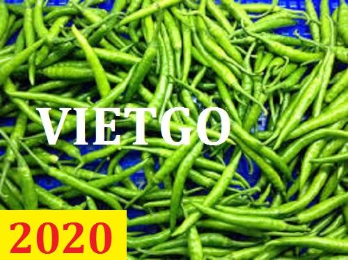 Cơ hội giao thương – Đơn hàng thường xuyên – Cơ hội xuất khẩu Ớt xanh từ Việt Nam sang thị trường Qatar.