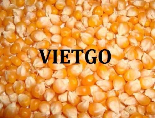 Cơ hội giao thương – Đơn hàng Cả Năm  - Cơ hội xuất khẩu Ngô Vàng cho vị khách hàng tiềm năng của VietGo sang thị trường Bangladesh.