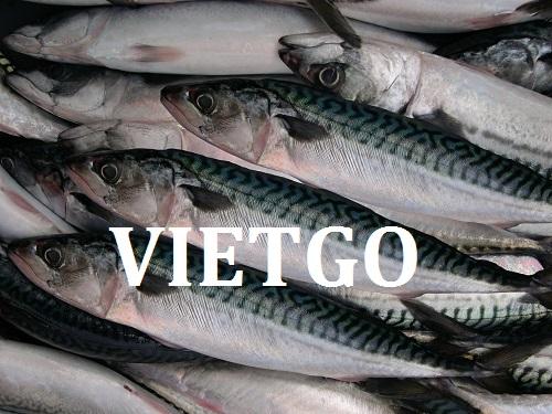 Cơ hội giao thương – Đơn hàng thường xuyên – Doanh nghiệp Ấn Độ cần tìm nhà cung cấp cá thu