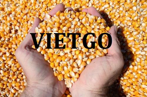 Cơ hội giao thương  - Đơn Hàng Hàng Tháng  -  Cơ hội xuất khẩu Ngô Hạt đến từ vị khách hàng người Colombia