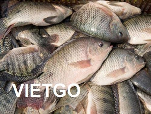 Cơ hội giao thương – Đơn hàng Hàng Năm - Cơ hội xuất khẩu Cá rô phi đông lạnh đến từ vị khách hàng người Tây Ban Nha