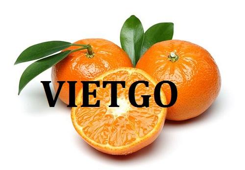 Cơ hội giao thương – Đơn hàng hàng tuần - Cơ hội xuất khẩu cam ngọt sang thị trường Ấn Độ.