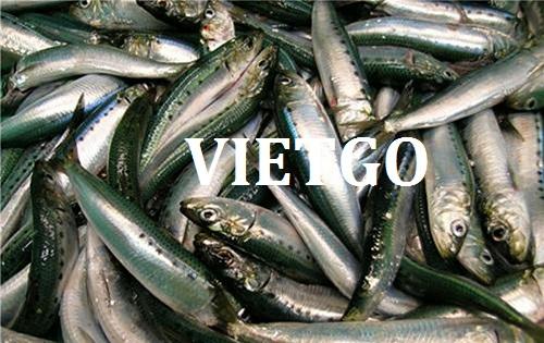Cơ hội giao thương Đặc Biệt Thường Xuyên – Cơ hội xuất khẩu Cá Mòi sang thị trường Qatar