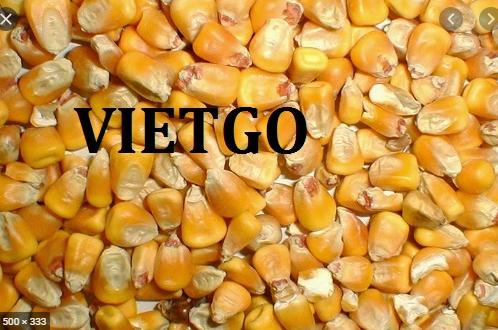 (Gấp) Cơ hội xuất khẩu ngô hạt và bã đậu nành sang thị trường Oman