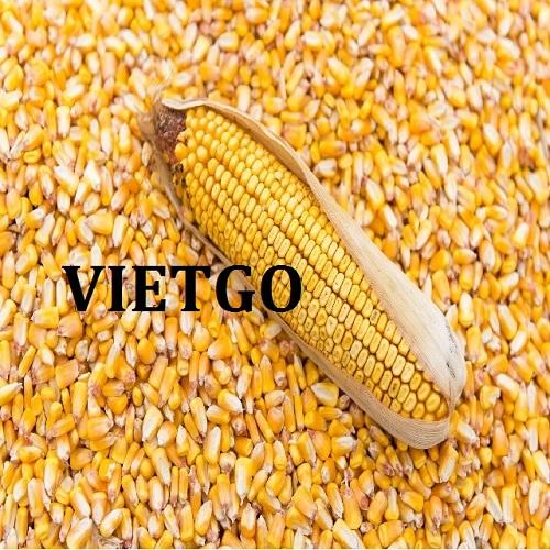 Cơ hội xuất khẩu 20.000 tấn ngô vàng và bột lúa mì sang thị trường Thổ Nhĩ Kỳ