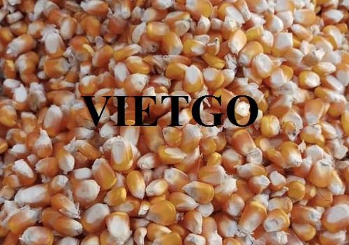Vị khách hàng tại Việt Nam tìm đối tác nhập khẩu Ngô Vàng từ các thị trường Brazil, Argentina và Ấn Độ