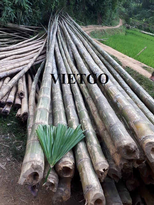 Opportunity to provide 1,000 bamboo trees to a business in Cambodia