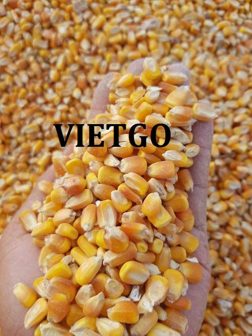 Opportunity to export yellow corn to the Indonesian market