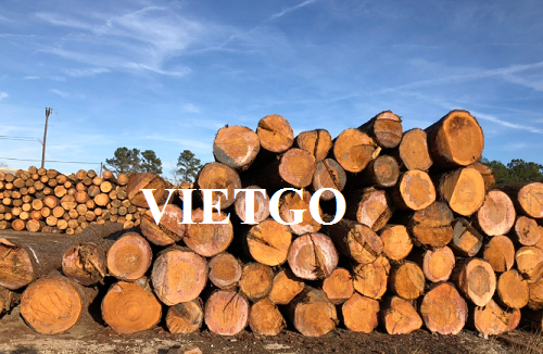 Opportunity to export monthly pine logs to Iran market