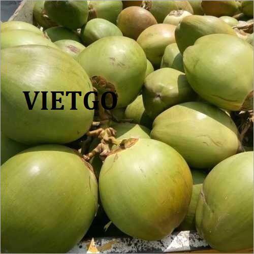 Cơ hội xuất khẩu dừa tươi sang thị trường Ấn Độ