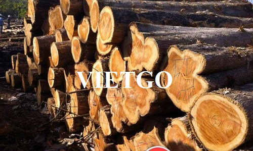 Opportunity to export 15 Teak log containers 20ft monthly to the Indian market