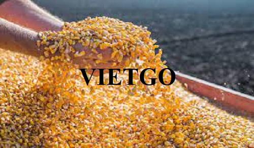 (Gấp) Cơ hội xuất khẩu 500 tấn Ngô hạt hàng tháng sang thị trường Ba Lan