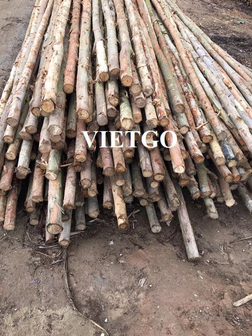(Gấp) Cơ hội xuất khẩu 60 container 40'HC gỗ bạch đàn tròn hàng tháng sang thị trường Trung Quốc
