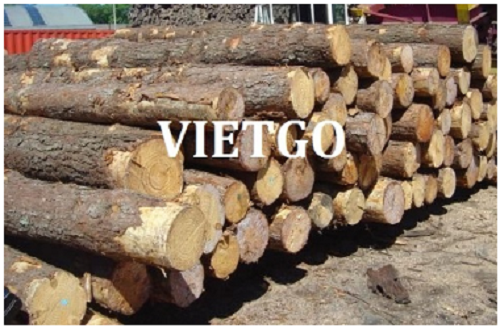 Opportunity to export 04 teak log containers 20ft to the Indian market