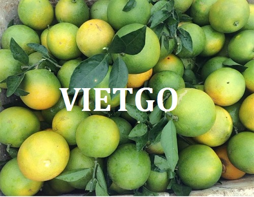 Opportunity to export yellow oranges to the Indian market
