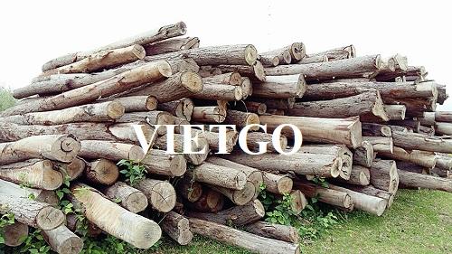 Cơ hội xuất khẩu 25 container 40ft gỗ bạch đàn tròn hàng tháng sang thị trường Trung Quốc