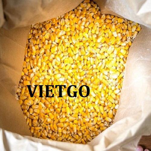Cơ hội xuất khẩu Ngô hạt hàng tháng sang thị trường Philippines