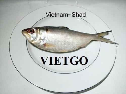 Cơ hội xuất khẩu cá mòi, cá lóc sang thị trường Bangladesh