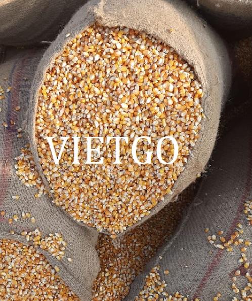 Cơ hội xuất khẩu ngô vàng sang thị trường Ấn Độ