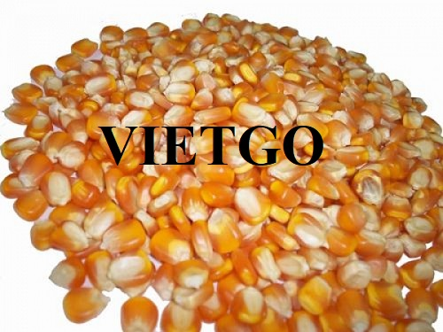 Cơ hội xuất khẩu Ngô hạt sang thị trường Thổ Nhĩ Kỳ