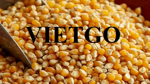 Opportunity to export yellow corn to Thailand market