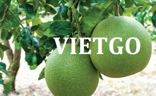 Opportunity to export Pomelo fruits to Bangladesh market
