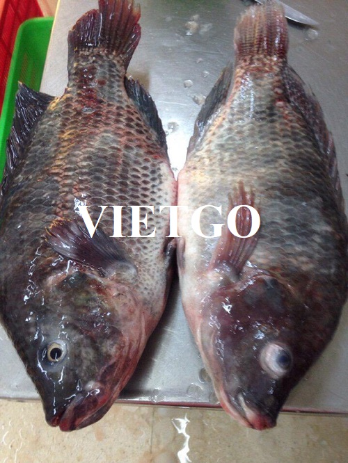 Opportunity to supply frozen tilapia to a seafood importer in Côte d'Ivoire