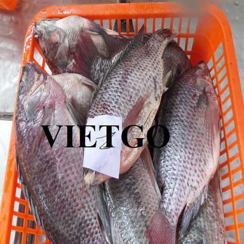 Opportunity to export 2 40ft containers of frozen tilapia to the Belgian market