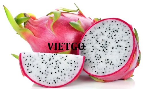Opportunity to export fresh dragon fruits to the Russian market