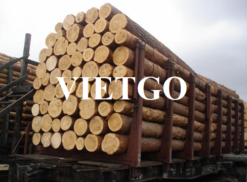 (Urgent) Opportunity to regularly export pine logs to Qatar market