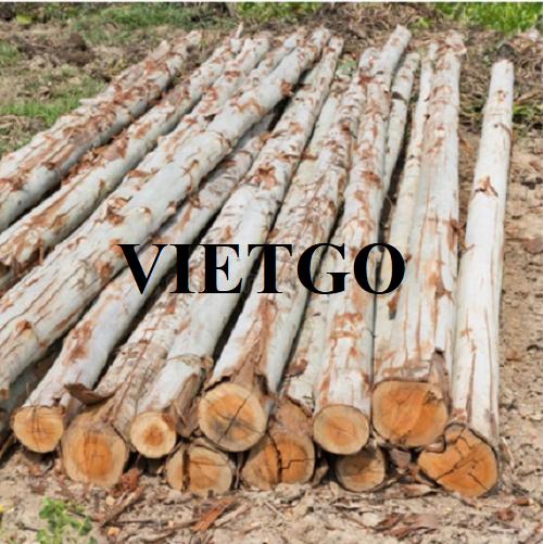 (Gấp) Cơ hội xuất khẩu thường xuyên gỗ bạch đàn tròn sang thị trường Qatar