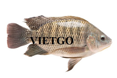 Opportunity to export 5 containers20ft per month of black tilapia to the Netherlands market