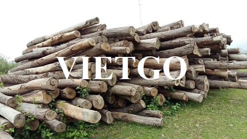 Cơ hội xuất khẩu gỗ bạch đàn tròn sang thị trường Trung Quốc