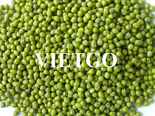 Opportunity to export mung beans in bulk to the Chinese market