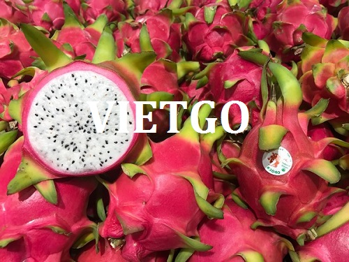 Opportunity to export dragon fruit to the Russian market